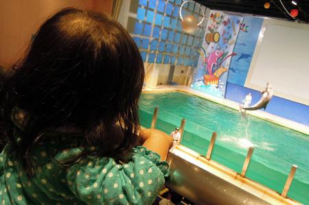 浅虫水族館のイルカショー