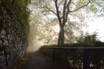 濃霧のタウバーリヴィエラ