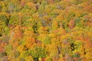 松川大橋から見た紅葉