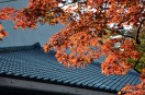 瓦屋根と紅葉