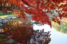 紅葉が池に映ってた