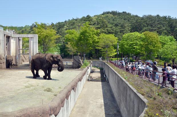 盛岡市動物公園の象