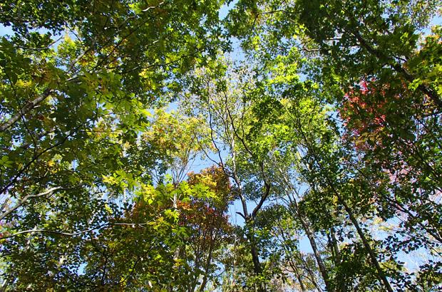 鞍掛山の青空と木々