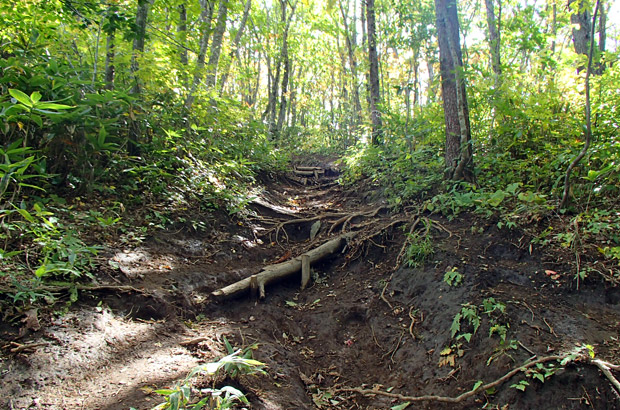 鞍掛山の登山道