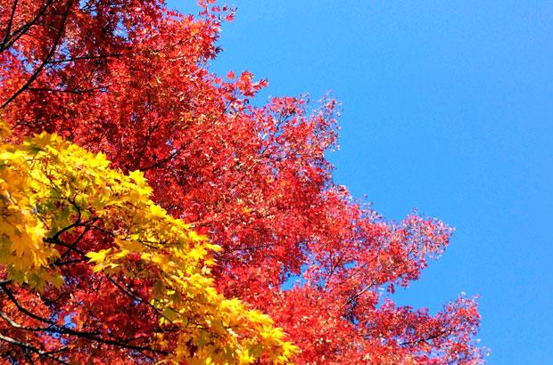 盛岡城跡公園の紅葉と青空